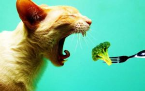 cat-eating-broccoli